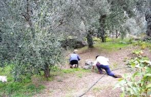 Δραστηριότητες στο IliaMare - Ελιές
