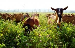 Δραστηριότητες στην οικογενειακή φάρμα