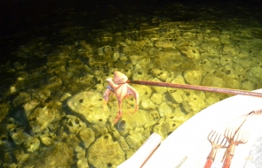 Δραστηριότητες στο IliaMare - Ψάρεμα